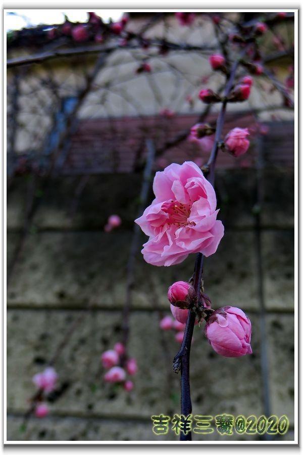 2020-03-25 川越 39.JPG